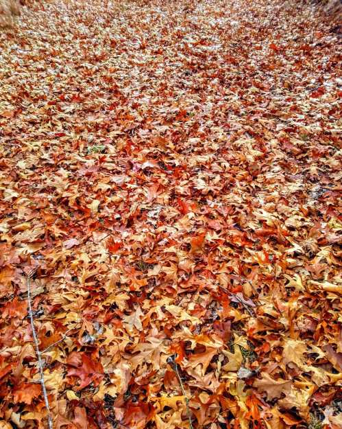 all-the-leaves